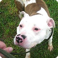 Adopt A Pet :: # 146-14  URGENT! - Zanesville, OH