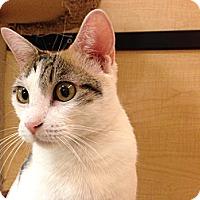 Adopt A Pet :: Hazel - Foothill Ranch, CA