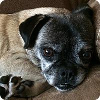 Adopt A Pet :: Fiesta - Grapevine, TX