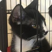 Adopt A Pet :: Robin - San Jose, CA