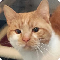 Adopt A Pet :: Toby - Colfax, IA