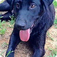 Adopt A Pet :: Daskota - Russellville, KY