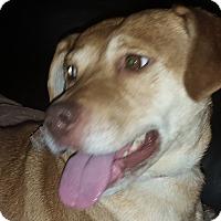 Adopt A Pet :: Mercy - Rockford, IL
