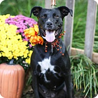 Adopt A Pet :: Morgana - West Orange, NJ