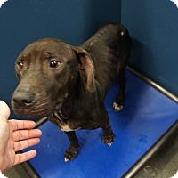 Adopt A Pet :: Keeton - Henderson, NC