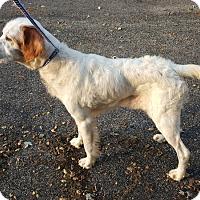 Adopt A Pet :: Parker - Plainfield, IL