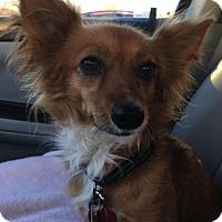 Adopt A Pet :: Daisy D3398 - Shakopee, MN