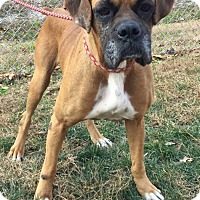 Adopt A Pet :: Tammie - available 12/10 - Sparta, NJ