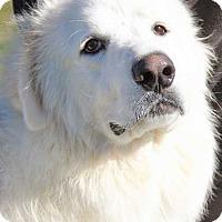 Adopt A Pet :: Thunder in NY - pending - Beacon, NY
