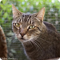 Adopt A Pet :: Maddie - Canyon Country, CA