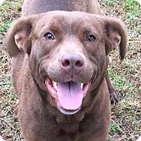 Adopt A Pet :: Brownie - Hanover, PA