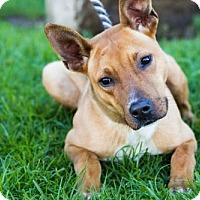 Adopt A Pet :: Acton - San Diego, CA