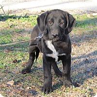 Adopt A Pet :: DERBY - Bedminster, NJ