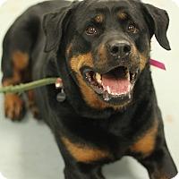 Adopt A Pet :: EZ - Frederick, PA