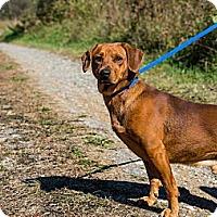 Adopt A Pet :: FlapJack - Chilhowie, VA