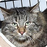 Adopt A Pet :: Clementine B - Sacramento, CA