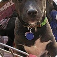 Adopt A Pet :: Albert - Phoenix, AZ