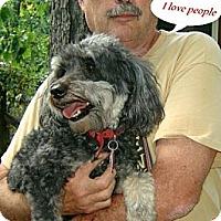 Adopt A Pet :: Tucker II - Franklinton, NC