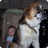 Adopt A Pet :: Zodiac - Summerville, SC