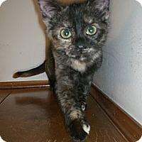 Adopt A Pet :: Poppy - Byron Center, MI