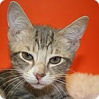 Adopt A Pet :: JULIAN - SILVER SPRING, MD