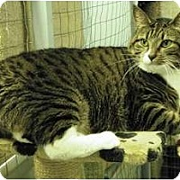 Adopt A Pet :: Cleo - Mission, BC