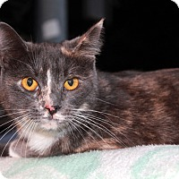 Adopt A Pet :: Agatha - Redlands, CA