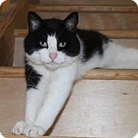 Adopt A Pet :: Brooks - Hamilton, ON