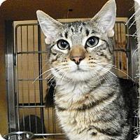 Adopt A Pet :: Trouble - Riverside, CA