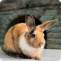 Adopt A Pet :: Amadeus - Marietta, GA