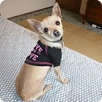 Adopt A Pet :: Oren - 6 lbs!  Quiet! - Bellflower, CA