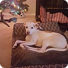 Adopt A Pet :: jesse