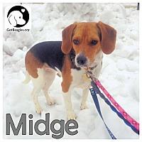 Adopt A Pet :: Midge - Pittsburgh, PA