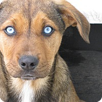 Adopt A Pet :: Tuesday - Charlemont, MA