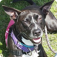Adopt A Pet :: Juri - Austin, TX