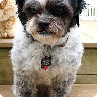 Adopt A Pet :: Bordentown NJ - Petey - New Jersey, NJ