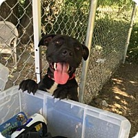 Adopt A Pet :: Adele - Cleveland, OH