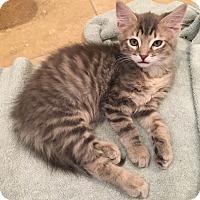 Adopt A Pet :: Evie - Scottsdale, AZ