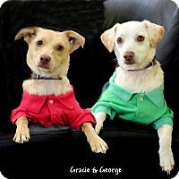Adopt A Pet :: Gracie & George - Dalton, GA