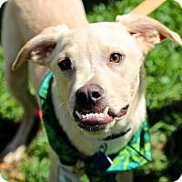 Adopt A Pet :: Sandwich Pup - Pastrami - San Diego, CA