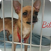 Adopt A Pet :: Bill - House Springs, MO