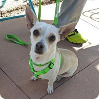 Adopt A Pet :: Takoda - tri-pod - Evergreen, CO
