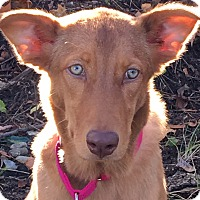 Adopt A Pet :: Brooklyn - Billerica, MA