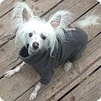 Adopt A Pet :: Dexter & Harold - Osseo, MN