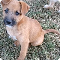 Adopt A Pet :: Jordan Almonds - Phoenix, AZ