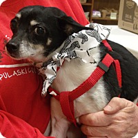 Adopt A Pet :: Cricket - Somerset, KY