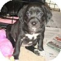 Adopt A Pet :: Pocahontas - Novi, MI