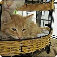 Adopt A Pet :: Galliano - The Colony, TX