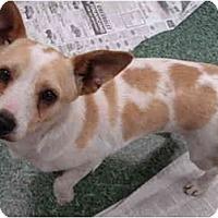 Adopt A Pet :: Koopa - Fowler, CA