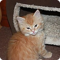 Adopt A Pet :: Hemlock (LE) - Little Falls, NJ